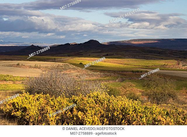 Cordovin vine scape, La Rioja wine region, Spain, Europe