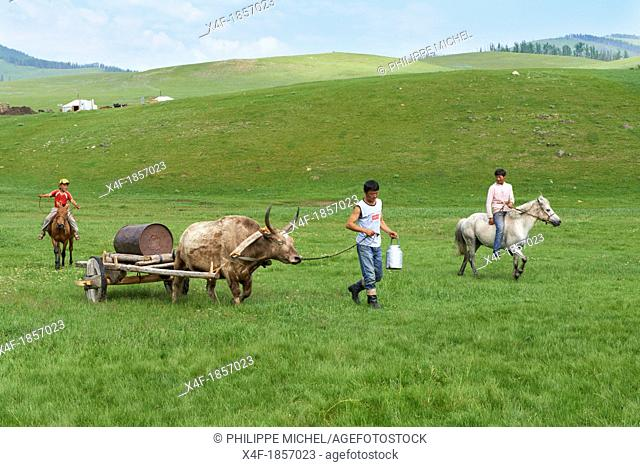 Mongolia, Arkhangai, Yellow Steppe valley, search for water
