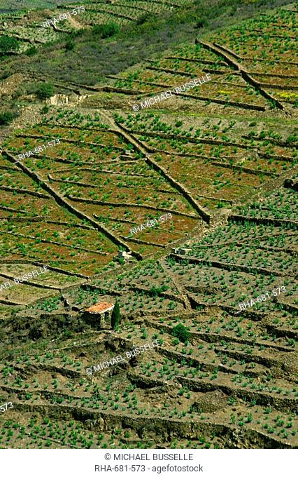 Aerial of vineyards on terraced land near Banyuls, Languedoc Roussillon, France, Europe