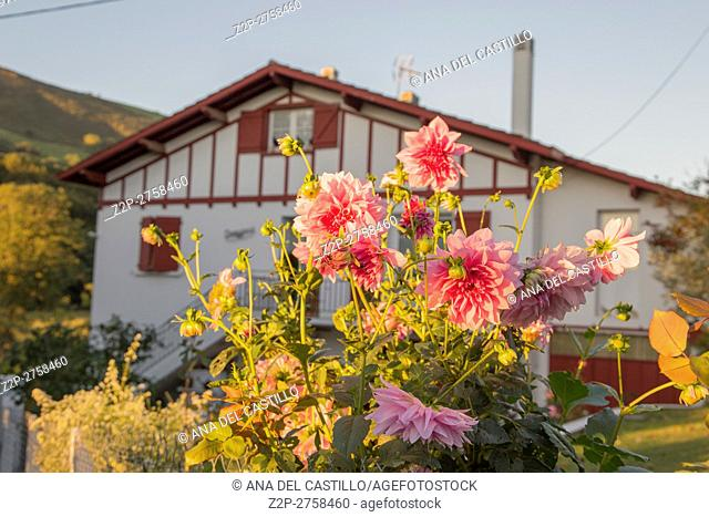 Itxaussu is a picturesque village in the Basque country France. Rural landscape. Close view of a white pink flower dahlia
