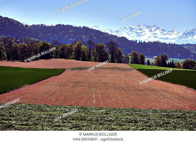 Scenery, field, field, meadow, mountains, the Alps, the Bernese Alps, wood, wood, Walking-completely, width, mountain range, brown, red-brown, ocher