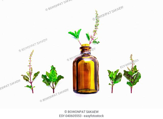 Holy Basil Essential Oil in a Glass Bottle with Fresh Holy Basil white wooden background