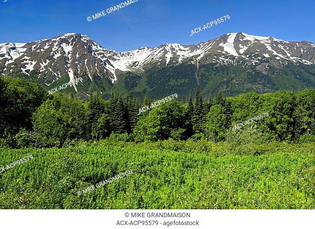 Coast Mountains Mt. Edziza Provincial Park British Columbia Canada