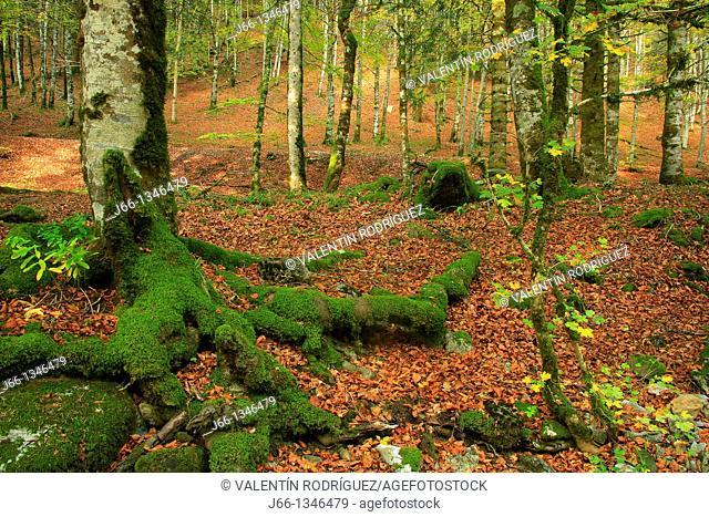 Irati Forest nature reserve, Navarre, Spain