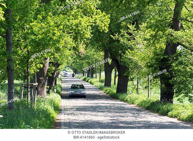 Deutsche Alleenstraße, or German Avenue Road, Putbus, Rügen, Mecklenburg-Western Pomerania, Germany