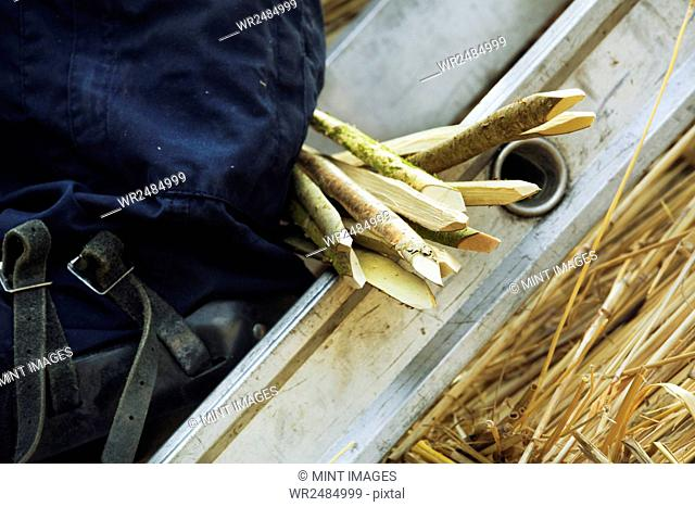 Close up of a bunch of wooden pegs used for thatching a roof