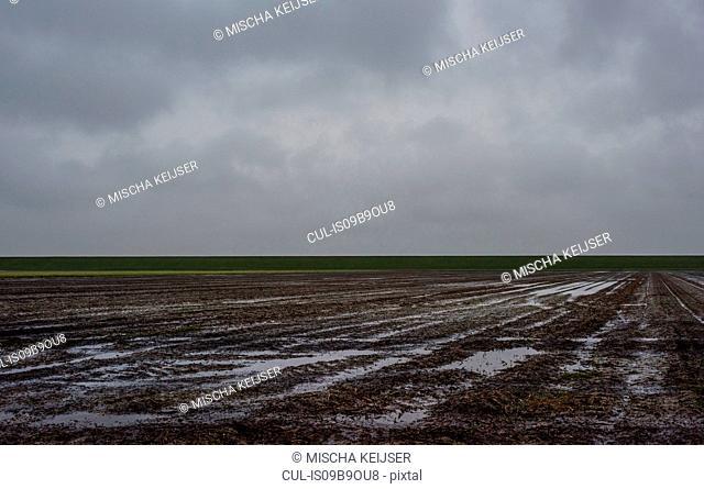 Fields soaking wet with rain, Valom, Groningen, Netherlands