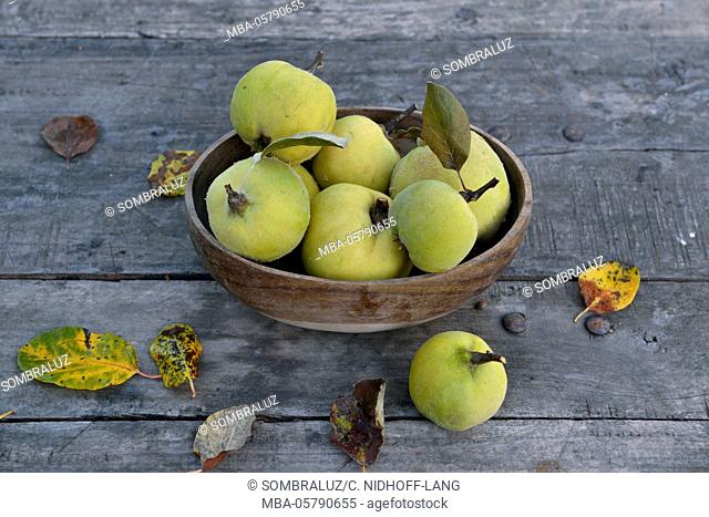 Apple quinces with wooden bowl