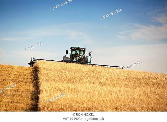 combine tractor in action, three hills, alberta, canada
