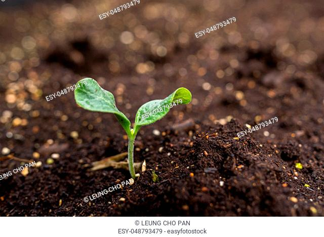 Seedlings are growing from the fertile soil