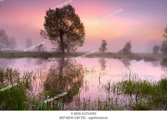 Poland, Podlaskie Province, Narew National Park. Backwater of the river Narew