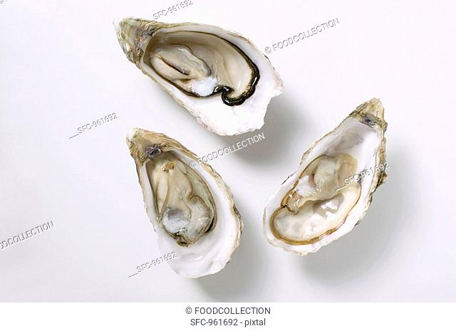 Fresh oysters, opened