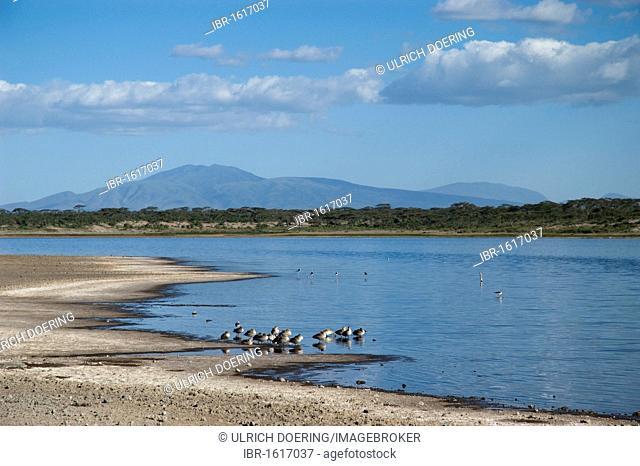 Lake Masek at the outset of Oldupai Gorge in Ndutu, the Ngorongoro highlands at back, Tanzania, Africa