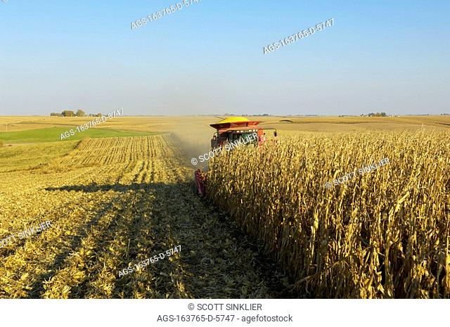 Agriculture - A combine harvests a crop of grain corn in Autumn / IA