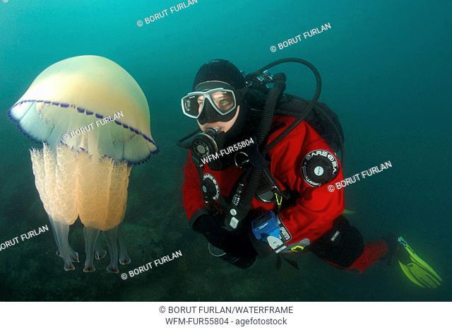 Rhizostome Jellyfish and Scuba Diver, Rhizostoma pulmo, Piran, Adriatic Sea, Slovenia