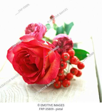 Pink roses and berries