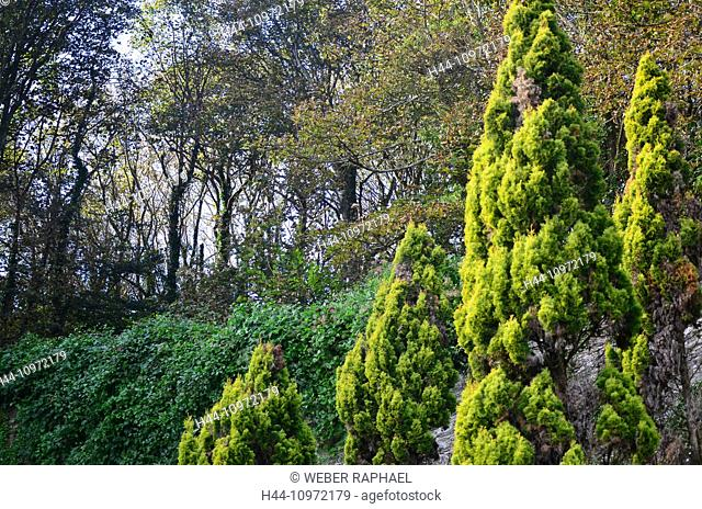 England, Devon, salcombe, garden, garden, castle garden, overbecks, national trust, Great Britain, Europe