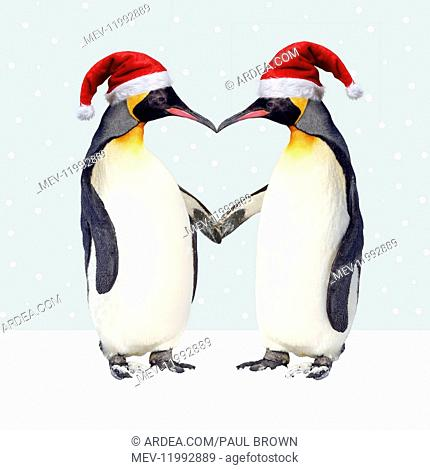 Emperor Penguin, pair wearing Christmas hats and holding hands creating a heart shape
