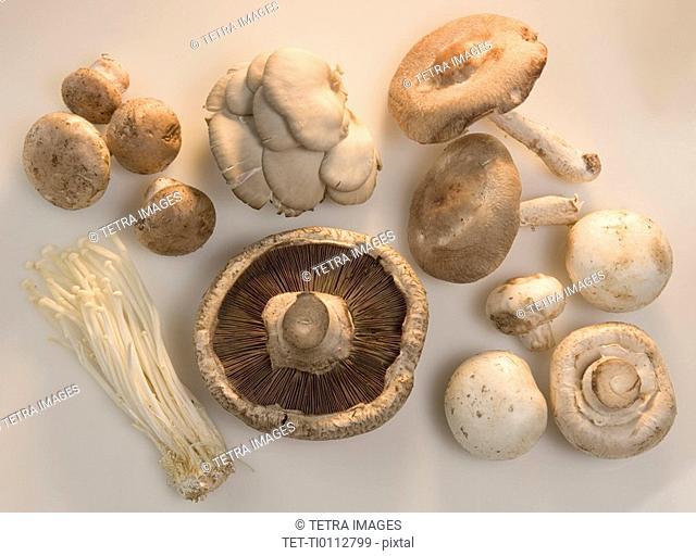 Many mushroom varieties