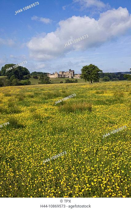 England, Northumberland, Field of Buttercups and Alnwick Castle