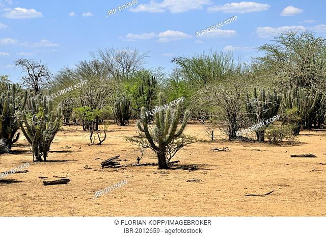 Dry landscape in the Gran Chaco region, after seven months with no rain, consequences of the climate change, Salta province, Argentina, South America