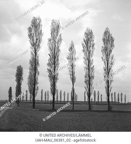Bäume in der Landschaft um Heidelberg, Deutschland 1930er Jahre. Trees in a landscape around Heidelberg, Germany 1930s