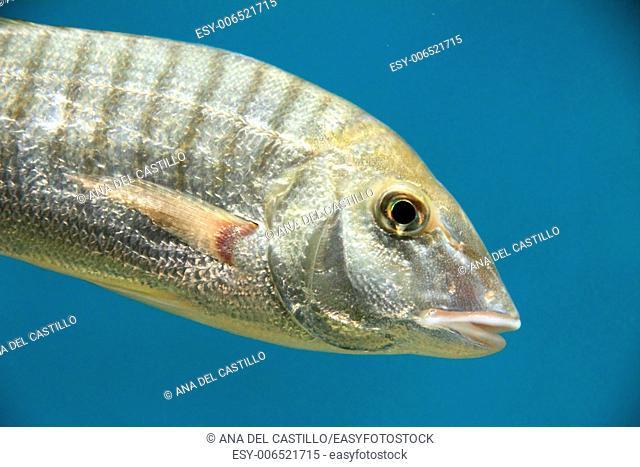 Fish Maritime museum Santander Spain
