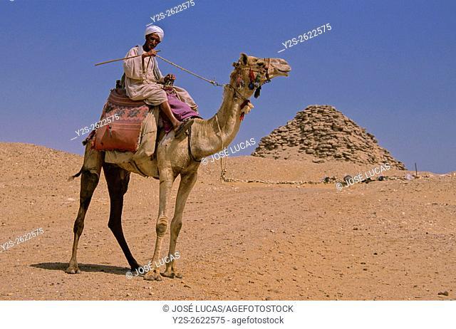 Userkaf pyramid and camel-25th century BC, Saqqara, Egypt, Africa
