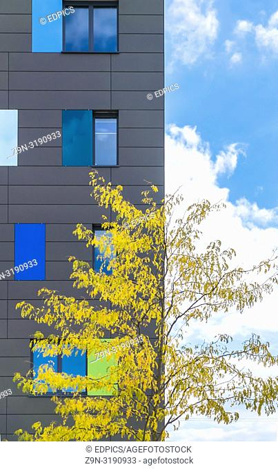 tree with yellow leaves in front of a modern building, blue sky with white clouds, boeblingen, baden-wuerttemberg, germany