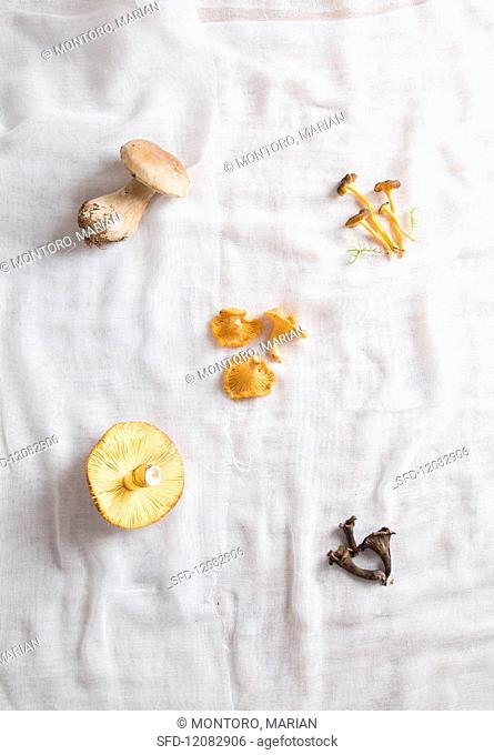 Different types of fresh mushroom on a cheesecloth