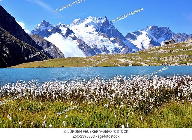 Mountain lake Lac du Goléon with cotton grass in the foreground and the mountain La Meije, Hautes-Alpes, French Alps, France