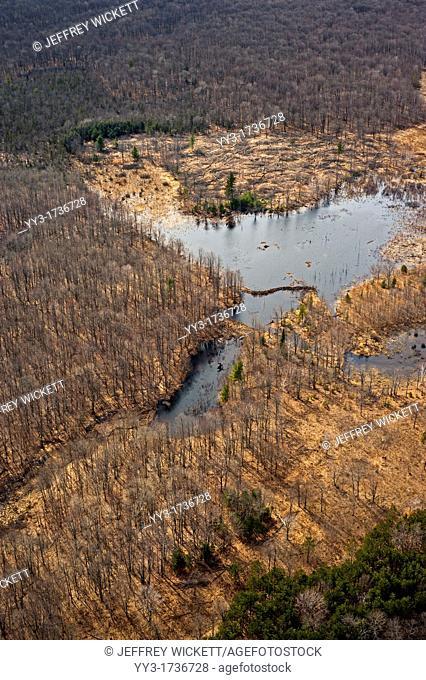 Wildlife habitat improvement, aspen regenation clear-cut adjacent to beaver pond, Huron-Manistee National Forest, Michigan, USA