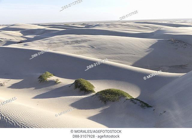 Central America, Mexico, Baja California Sur, Guerrero Negro, Sand dunes of Dunas de Soledad, Coastal Sand Dunes, white sand