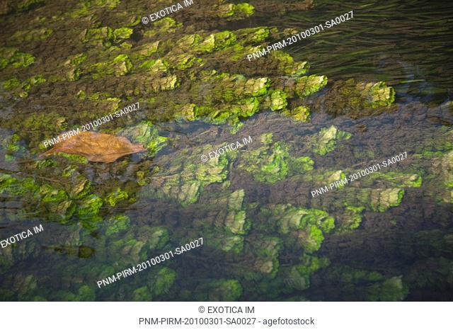 Stream flowing over moss, Kochi, Kerala, India
