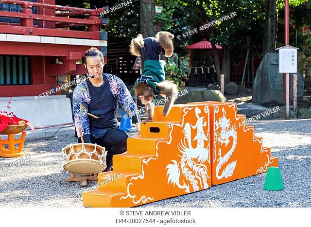 Japan, Hoshu, Tokyo, Asakusa, Asakusa Kannon Temple aka Sensoji, Performing Monkey Show