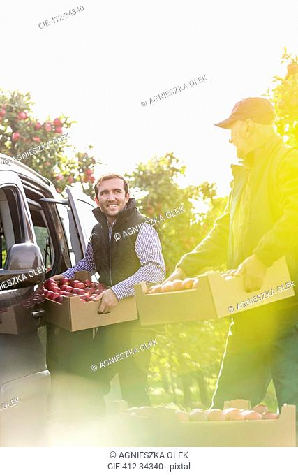 Smiling male farmers loading apples into car in sunny orchard