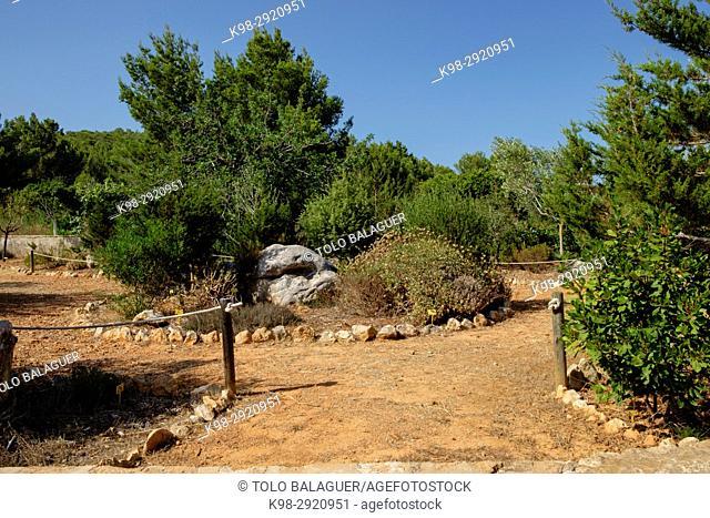 Mediterranean botanical garden, Sant Llorenç, Ets Amunts, Ibiza, Balearic Islands, Spain