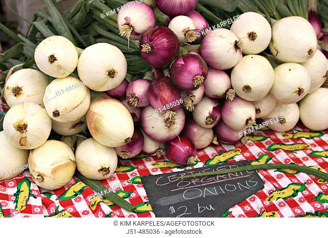 VEGETABLES. Chicago, Illinois. Bunches of red and white organically grown onions displayed on red checked cloth at farmers market, sign with price, Lincoln Park