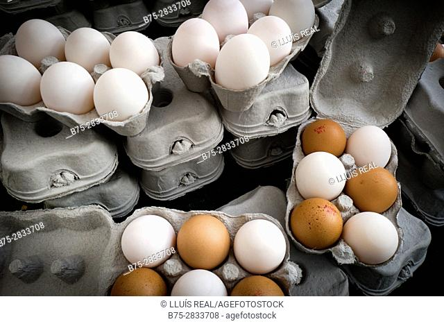 White and brown eggs in cartons