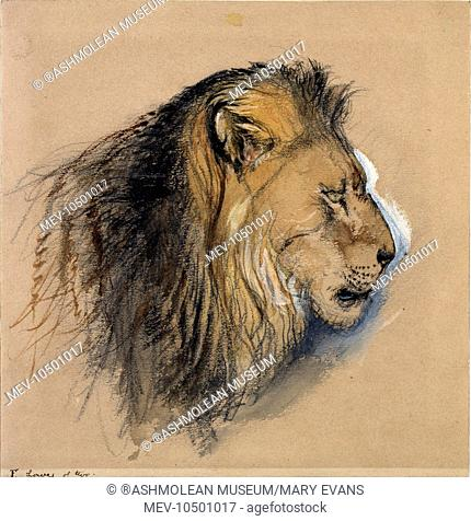 A Lion's Profile, from life. John Ruskin