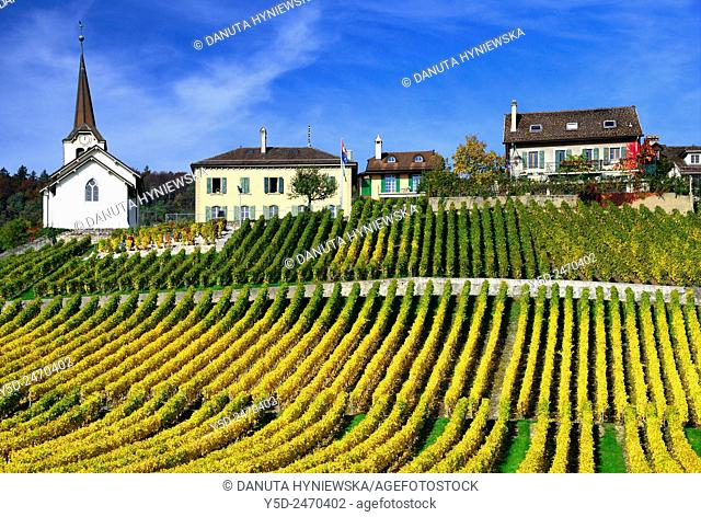 Europe, Switzerland, Canton Vaud, La Côte, Morges district, Féchy, vineyards in early autumn