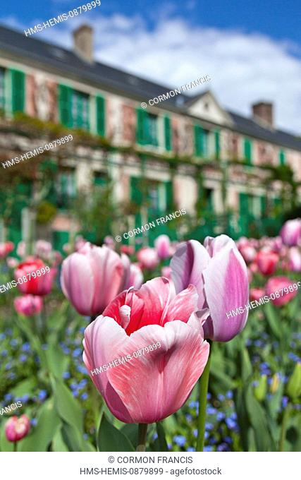 France, Eure, Giverny, Claude Monet Foundation, gardens of Monet's house, tulips in the foreground