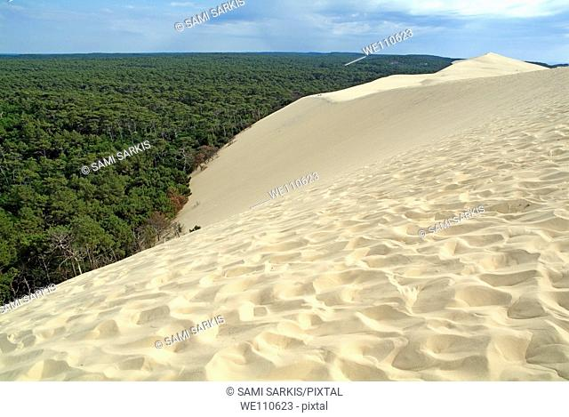 Landes Forest seen from the Great Dune of Pyla, France