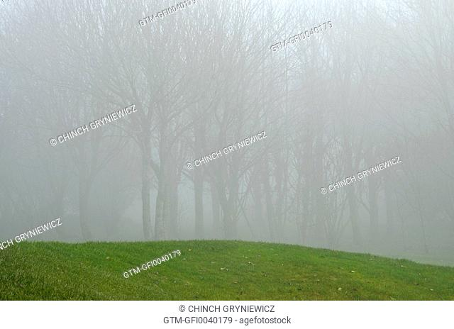 Leafless Trees In Mist On Green Slope