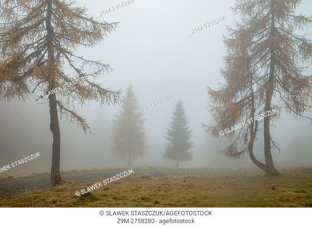 Misty autumn near Sauris di Sopra, Udine province, Friuli-Venezia Giulia, Italy. Dolomites