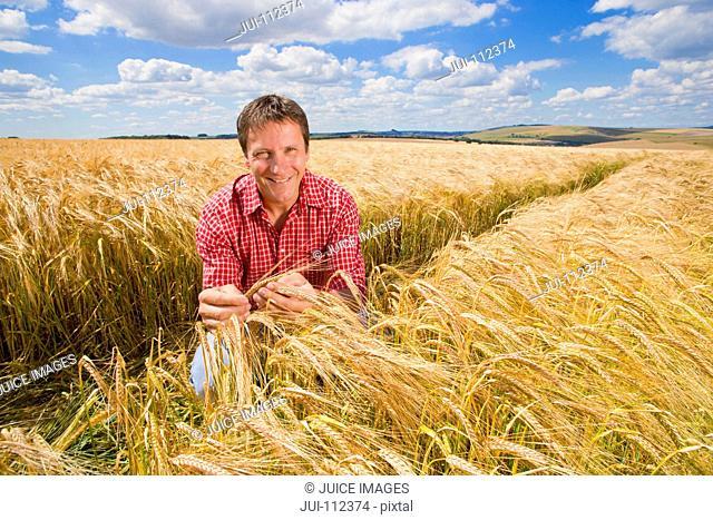Portrait confident farmer examining sunny rural barley crop field in summer