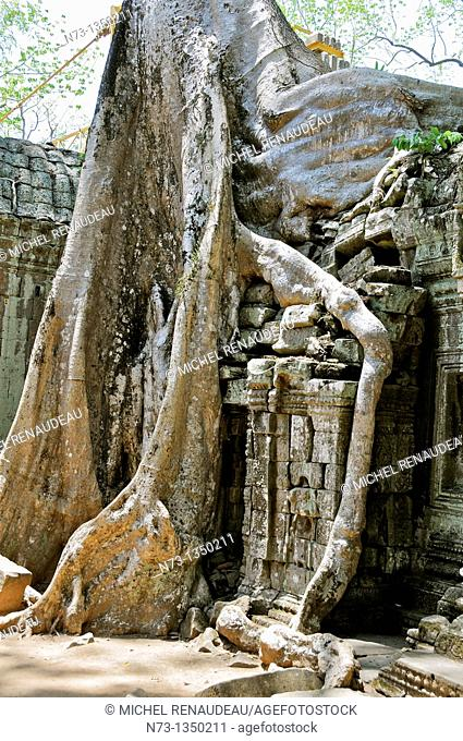 Cambodia, Siem Reap Province, Angkor classified World Heritage by UNESCO, the temple of Ta Prohm, built in 1186 by King Jayavarman VII