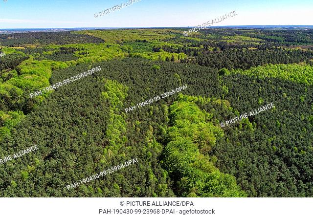 25 April 2019, Brandenburg, Sieversdorf: A mixed forest in the Oder-Spree district (aerial photograph with a drone) appears in different shades of green