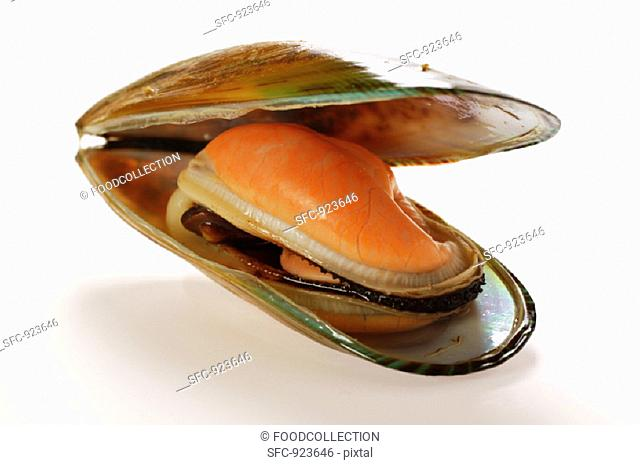 New Zealand mussel, opened
