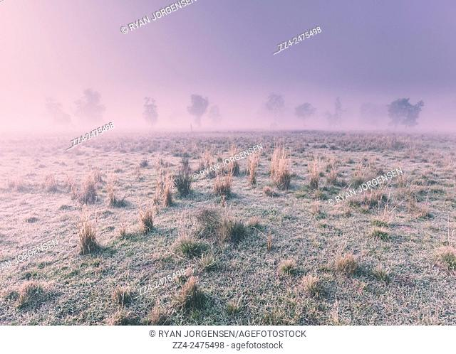 Simplistic cold climate landscape on a frost immersed winter grassland with distant fog spanning trees in perspective. Hazy Australian winter scene, Alleena